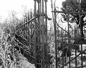 Cemetery Fence and Cat, Black & White Photography, Fine Art Photography, Digital Download, Printable Wall Art, Halloween, Cat Photo