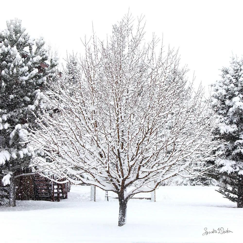Snow Photo, Tree in the S...