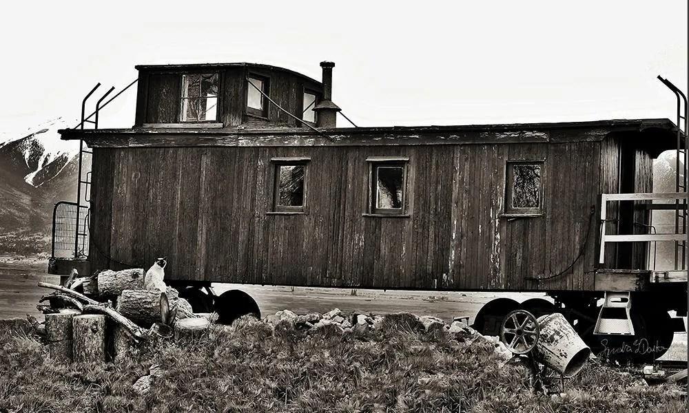 Train Photo, Cat Photogra...
