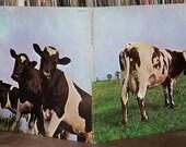 Pink Floyd Atom Heart Mot...