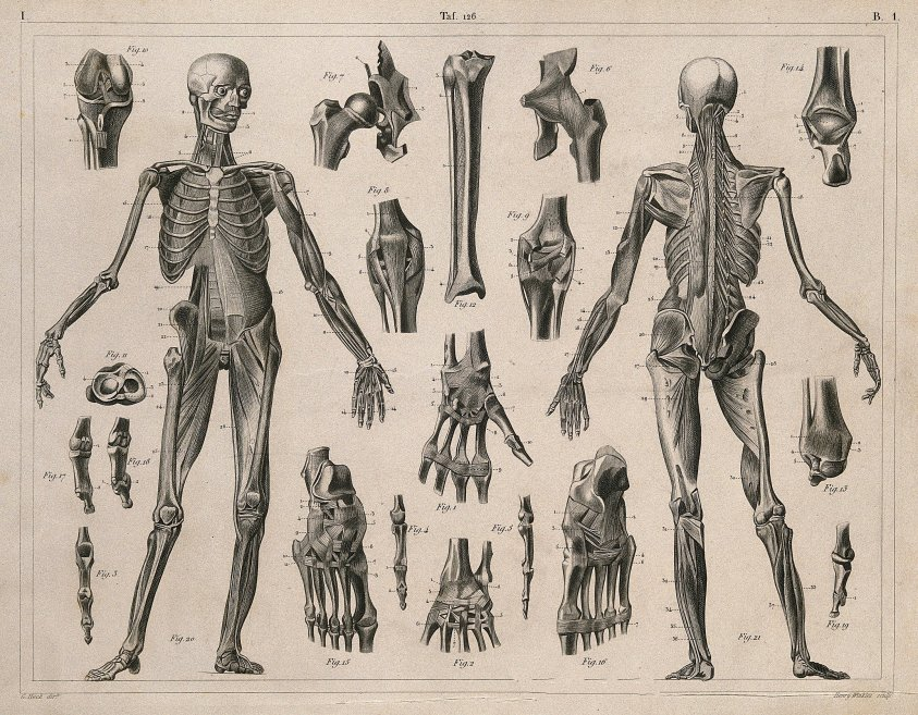 Anatomy Pictures Muscles And Bones Pdf Downloads : 14 Best ...