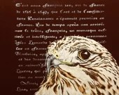 The literary hawk