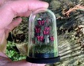 Miniature Butterfly Display Dome, Diorama.