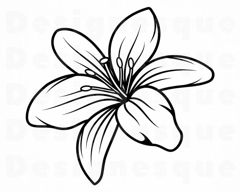 Download Lily Flower 3 SVG Lily Flower Svg Lily SVG Flower Svg   Etsy