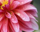 Pink Dahlia / Blank Greeting Card / Note Card / Nature / Photography