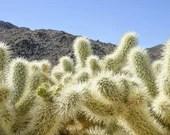 Wild Desert Cactus Plant