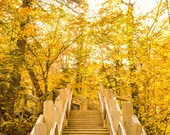 Nature Trail Through Fall Yellow Forest