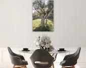 Olivenbaum auf Mallorca || Wandbild || Alu Verbund gebürstet || 40x60 cm || 60x90 cm