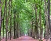 Wald Druck, Landschaftsfotografie, Fotografie Kunstdruck, Fine Art Druck, Natur Foto, Wandbild, Baum Fotografie, Landschaft Bild