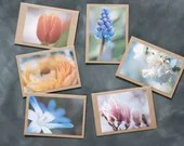 Grußkarten mit Frühlingsmotiven    Fineart Druck    Fotografie Postkarten