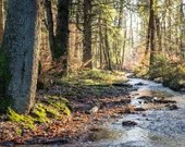 Foto Wald, beruhigende Bilder, Fine Art Fotografie, Wald Druck, Landschaftsbilder, Fotografie Druck, Natur Foto, Foto Baum, Panorama Bild