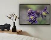 Wiesenblumen, Garten, Natur Foto, Fine Art Fotografie, Makrofotografie, Fotografie Natur, Druck Bild, Druck Blumen, Wiesengrüns, Fotodruck