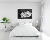 Gänseblümchen, schwarz weiß Fotografie, Natur Foto, Bild Wiese, Fine Art Fotografie, Pflanzen Bilder, Makrofotografie, schwarz weiß Bilder