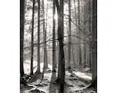Fine Art Fotografie schwarz weiß, Baum Fotografie, Foto Wald, Druck Natur, schwarz weiß Wandbild, Fotografie Kunstdruck, Baum Fotografie