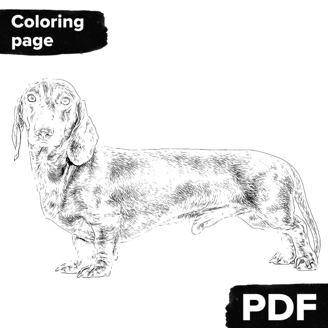 Dachshund coloring page, Adult coloring page realistic for dog lover, Pet  coloring book with dachshund