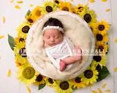 Sunflower Newborn Digital Backdrops (3)