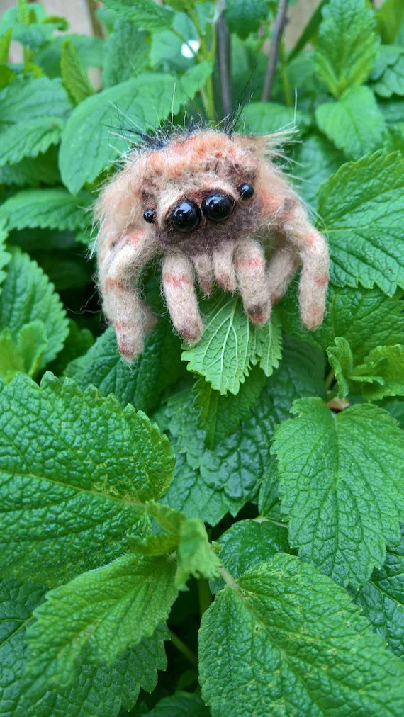 Cute needle felted jumping spider