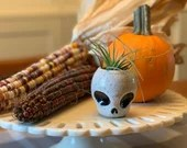 Miniature Skull with Air plant - Small Ceramic wheel thrown skull planter, includes live plant / fall decor - READY TO SHIP