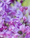 Nature Photography Lilacs Purple Flowers Nature Spring Etsy