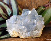 Celestite Cluster, Celestite Geode, Celestite Crystal Cluster, Crown Chakra crystal, Calming Crystal, Crystal for Prophetic Dreams ~2139