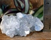 Celestite Cluster, Celestite Geode, Celestite Crystal Cluster, Crown Chakra crystal, Calming Crystal, Crystal for Prophetic Dreams ~2136