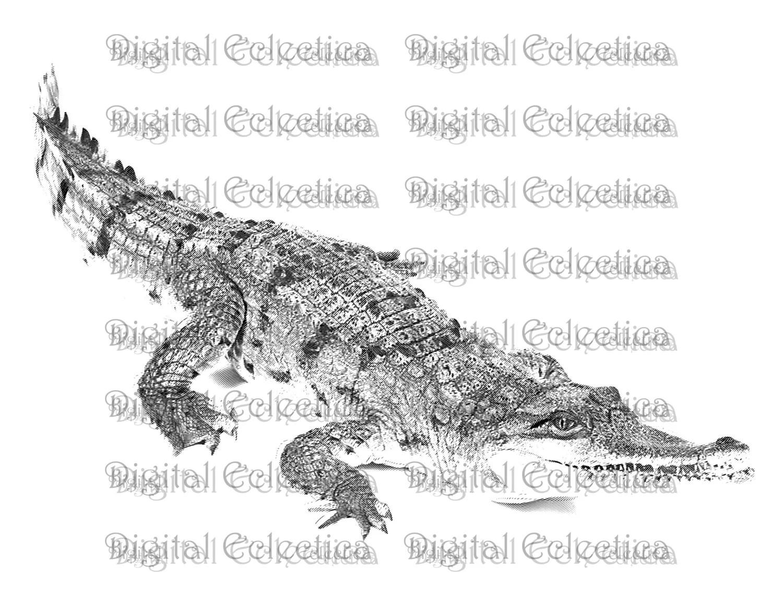 Crocodile Engraving Crocodile Crocodile Prints