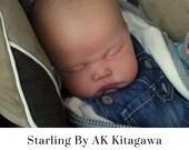 CuStOm Starling by AK Kitagawa (23 Inches + Full Limbs)