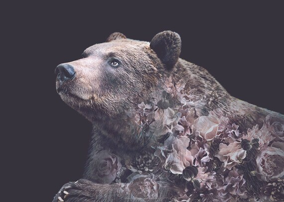 Grizzly Bear Flower Portrait Faunascapes Art Print By