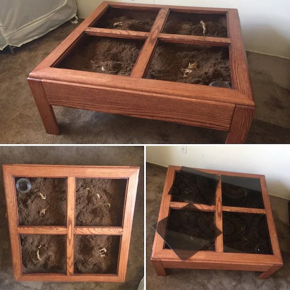upcycled terrarium coffee table light up reptile home zen garden solid red oak wood tank for snakes tarantula spider scorpion sand boa
