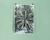 Large photo print of cactus plant, home decor, analog, plant print, gift for artsy friend