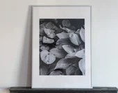 Large photo print of a plant, b&w, analog photography, 16x24 inches (40x60cm)