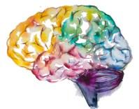 Bildresultat för WATERCOLORS brain