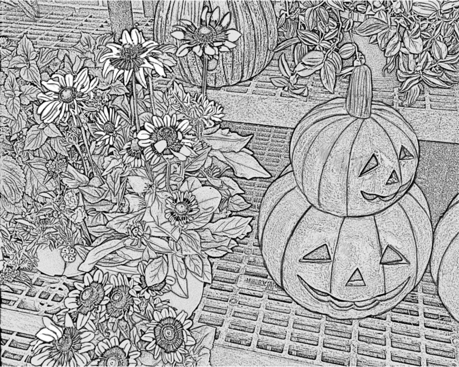Jack O Lanterns And Flowers Adult Coloring Pages Gray