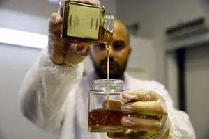 D'après les scientifiques, les pesticides utilisés sont des dérivés chimiques de la nicotine.