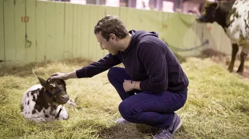 Mark Zuckerberg et un veau