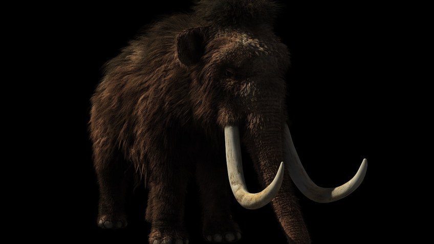 Bioscience Firm Plans to Resurrect Woolly Mammoths in Next 5 Years