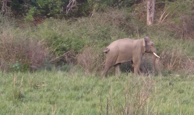 prashant locus tusker elephant