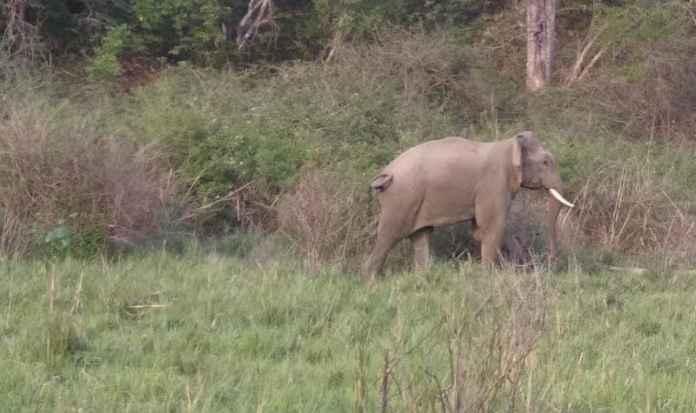 प्रशान्त ठिकाने का हाथी