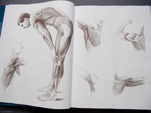 Anatomy Drawing School: Human, Animal, Comparative Anatomy ...