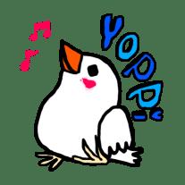 白文鳥のよっぴ