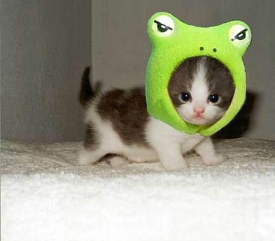Cutest Paw Collecting Animal Photographs Of Cute And Cute Cats Dogs Rabbits Etc From All Over The World Gigazine