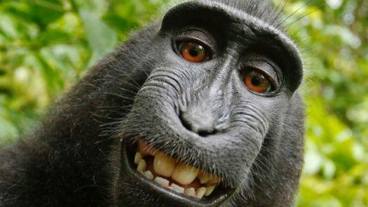 https://i1.wp.com/i.gzn.jp/img/2016/01/07/monkey-cannot-own-copyright/top.jpg?w=525