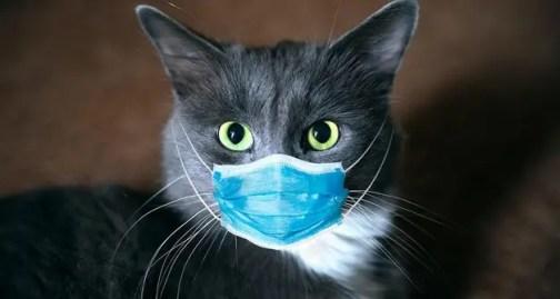 Korkulan oldu, kedi koronavirüse yakalandı!