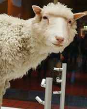british scientist stunned the world by cloning a lamb Embryonic development - growth and development 18 after you  life and habit introduction the world was stunned in february 1997.