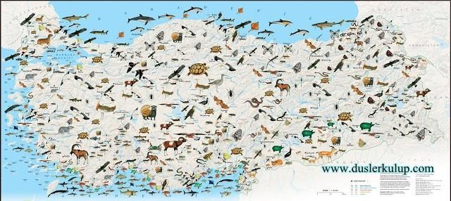 türkiyede avlanma haritası