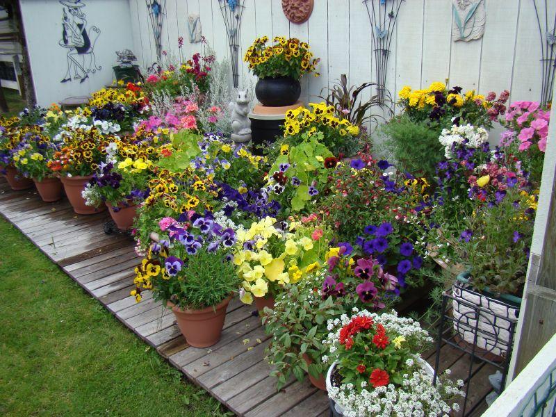 Tall Flower Pot Ideas
