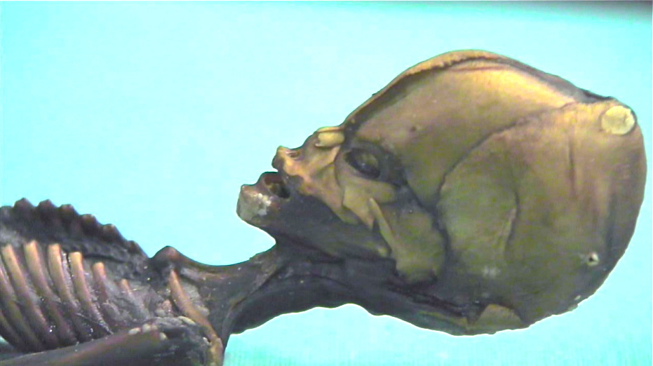 Atacama Humanoid,Head close-up.