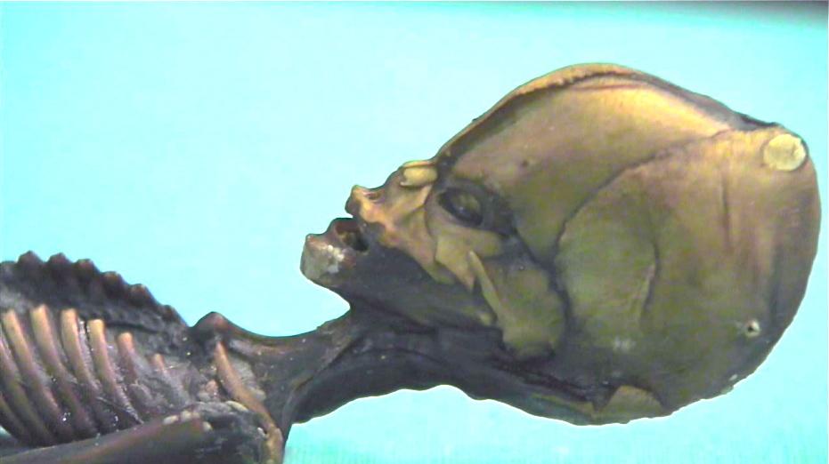 Atacama Humanoid,Head close-up.