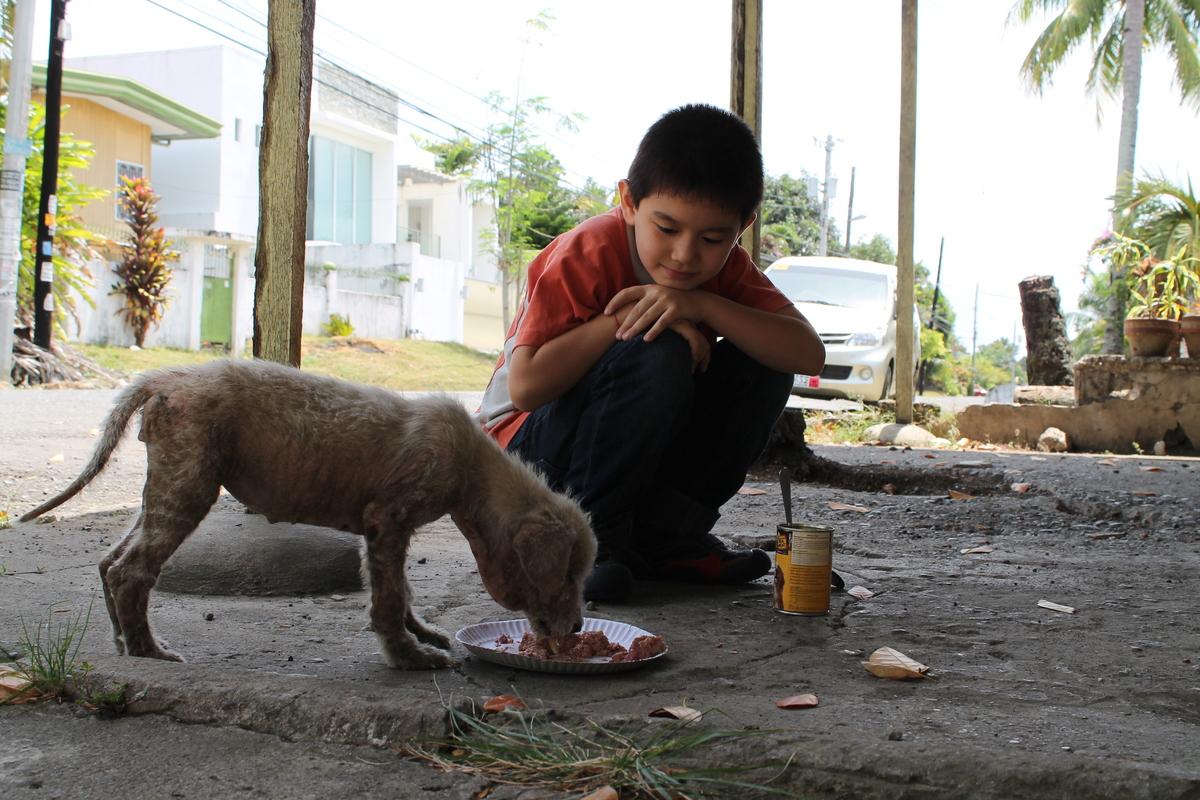 This 9 Year Old Built A Nonprofit No Kill Animal Shelter