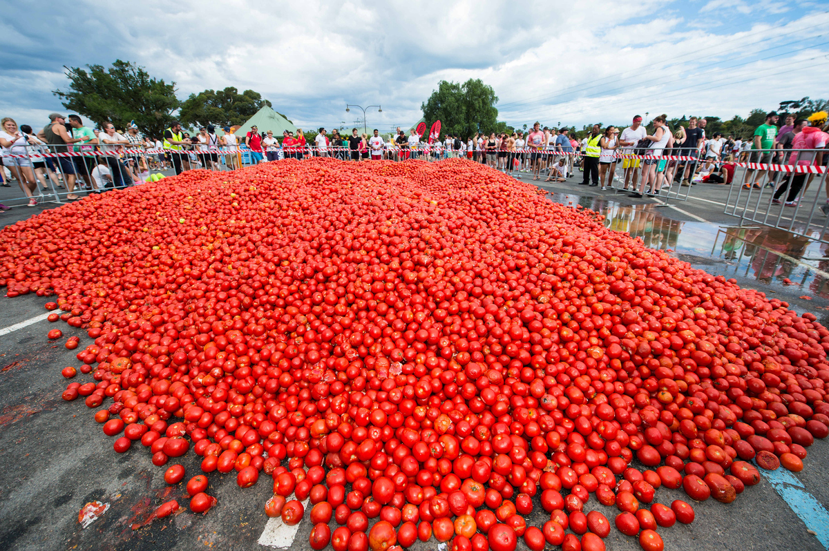 Here S What 5 000 Australians Battling Each Other With 300 000 Tomatoes Looks Like